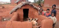 Elevage rural proche d'Antananarivo, Madagascar - A.Bretaudeau (c) Cirad, 2008